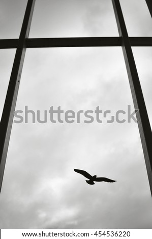 Silhouette of a single bird on a window of a modern building. - stock photo