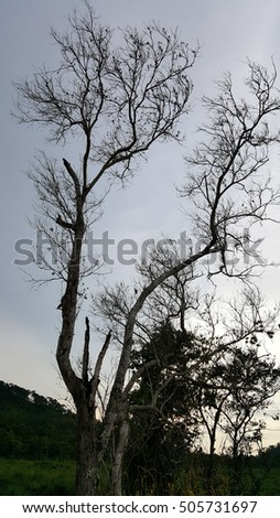 Silhouette of a skeleton dead tree under the grey sky