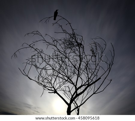 Silhouette of a solitary black bird perched on top of a barren twisted tree against a blue surreal sky for the concept: Lonely when you are at the top. - stock photo