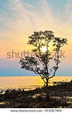 Silhouette of a tree against the sunset