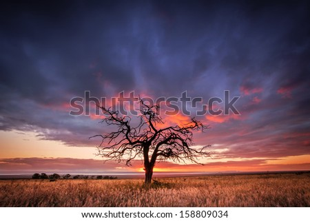 Silhouette of a tree in the Flinders Ranges, South Australia - stock photo