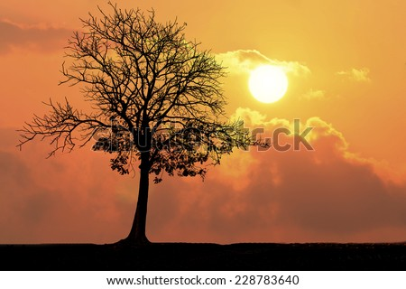 Silhouette of a tree in the sunset