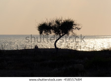 Silhouette of a tree on sea background at sunset, Kato Paphos, Cyprus