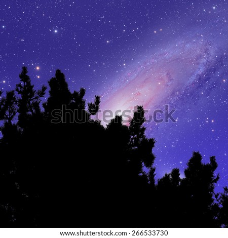 Silhouette of a tree with Andromeda galaxy in the background. Andromeda galaxy is my astrophotography work. - stock photo
