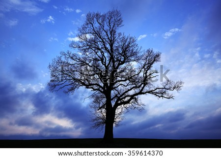 Silhouette of a tree with dark clouds in background - stock photo