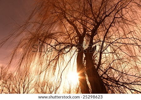Silhouette of a willow tree against the sun - stock photo