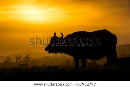 stock-photo-silhouette-of-an-african-buf