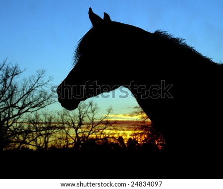 Silhouette of Arabian horse head at sunset - stock photo