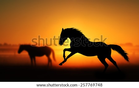 Silhouette of beautiful horse on a background of sunrise. Stallion galloping in a field on a background of other horses. Orange and red colors - stock photo
