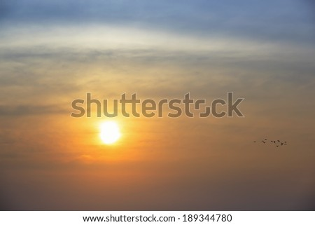 silhouette of bird flying at sunset - stock photo