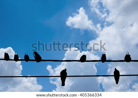 Silhouette of Bird on the electric wire cable   - stock photo