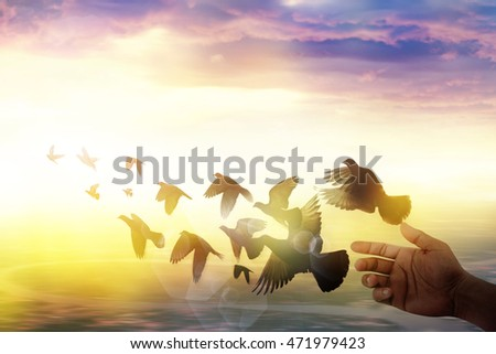 silhouette of birds flying out of hand. freedom concept
