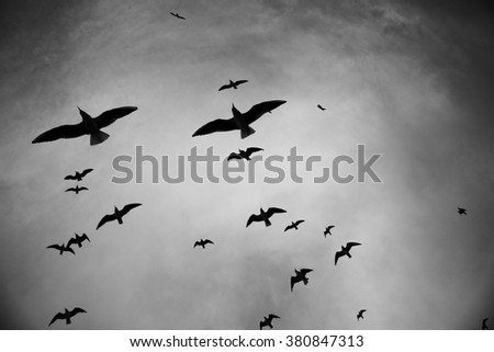 Silhouette of birds flying through a surreal gray sky, black and white