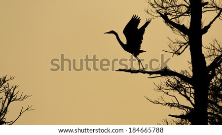 Silhouette of blue heron taking off. - stock photo