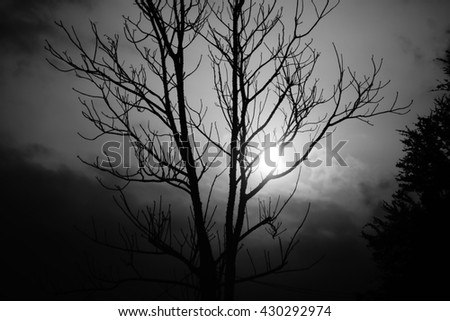 silhouette of branch and a sun on background, black and white picture style - stock photo