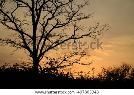 Silhouette of branch of tree at the sunset.Silhouette branches with sunset background.