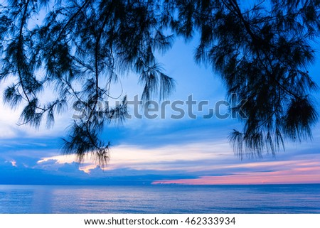 silhouette of casuarina in the morning