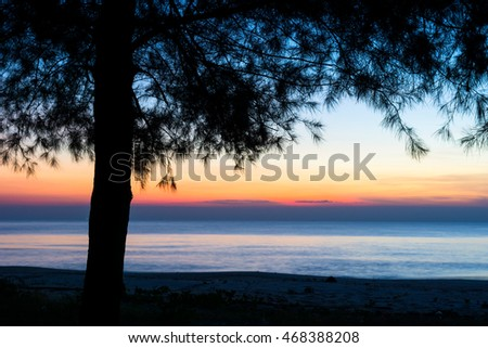 silhouette of casuarina tree in the morning