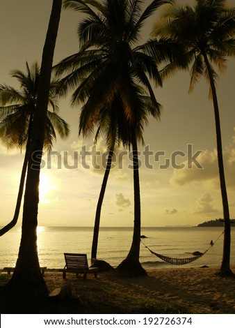 silhouette of coconut trees and hammock during sunset