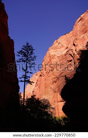 Silhouette of conifer in red sandstone canyon,  along the Taylor Creek trail, Kolob Canyon, Zion National Park, Utah - stock photo