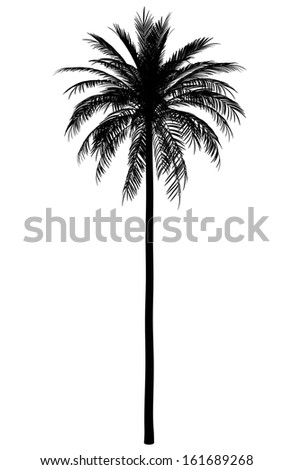 silhouette of date palm tree isolated on white background - stock photo