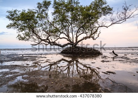 Silhouette of dead tree over the sea beautiful sunset pastel background .Big one tree on  pastel background landscape  summer reflection dry tree shadow beautiful land the sea of thailand  bangkok.   - stock photo
