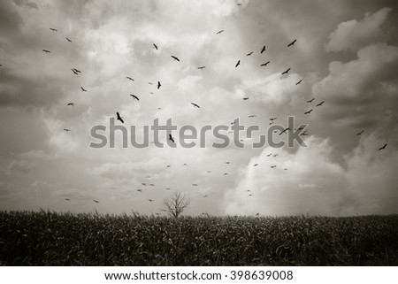 Silhouette of  dead tree  with birds flying on cloud sky dark background - stock photo