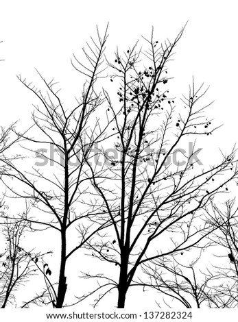 Silhouette of dead tree without leaves - stock photo