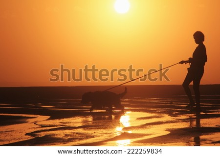 Silhouette of dog and women Walking the beach.