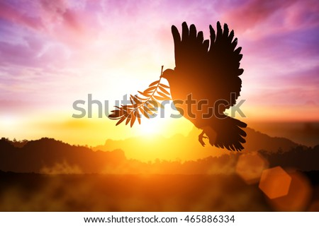 Silhouette of Dove carrying olive leaf branch .Freedom concept and World Peace Day and international day of peace 2016
