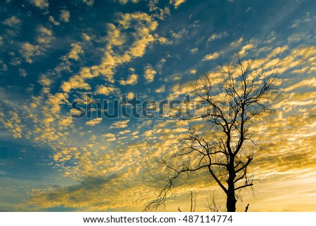 Silhouette of dried tree with nice sunset sky