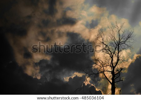 Silhouette of dried tree with sun ray and cloudy sky