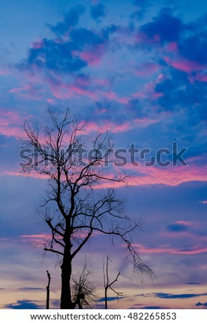 Silhouette of dried tree with twilight sky