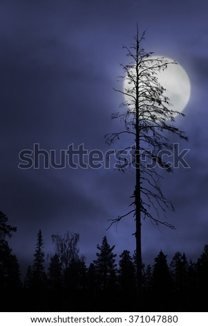 Silhouette of dry bare tree on dark purple sky with full moon - stock photo