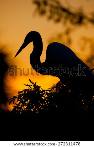 Silhouette of egret at sunset - stock photo