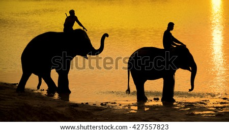 silhouette of elephant in river
