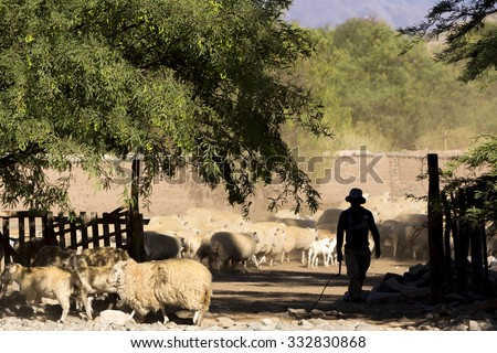Silhouette of farmer and his shepherd on country road in Cachi, Salta Province. Argentina - stock photo