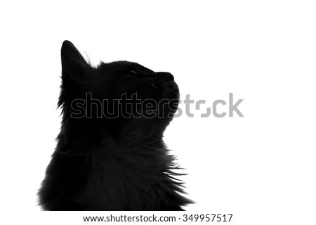 silhouette of fluffy cat on a white background