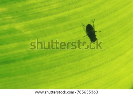 Silhouette of fly on green leaf