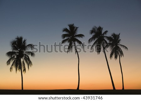 Silhouette of four palm trees on the beach