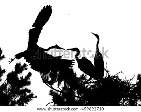 Silhouette of Grey Heron chicks in the nest - stock photo