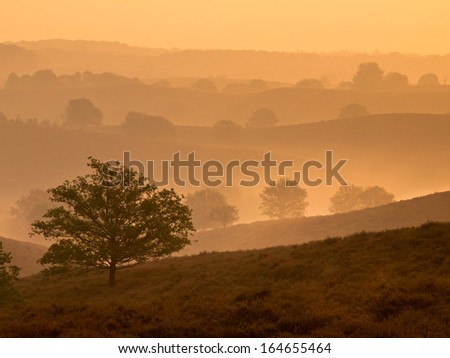 Silhouette of Hills and Trees during Sunrise over Veluwe  National Park - stock photo