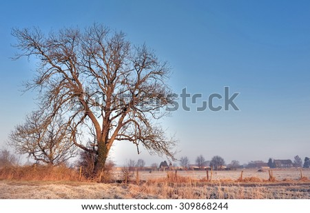 Silhouette of large ash in winter countryside - stock photo