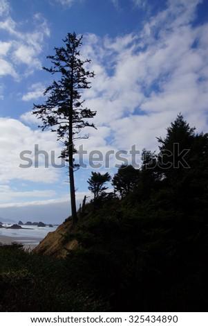 Silhouette of large conifers on coastal headland,  Indian Beach in Ecola State park,   Oregon Coast - stock photo
