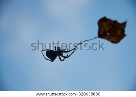 Silhouette of large happy face spider in web with bug against  blue sky background Empty copy space for inscription or objects Leaf hand on cobweb - stock photo