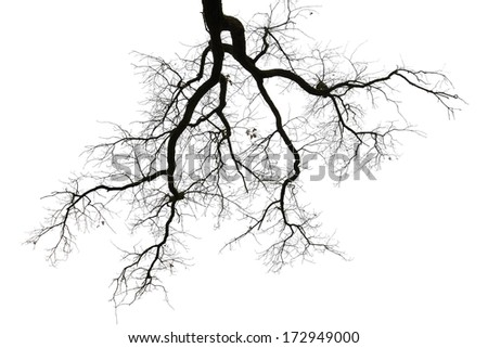 Silhouette of leafless branches of a tree on white background - stock photo