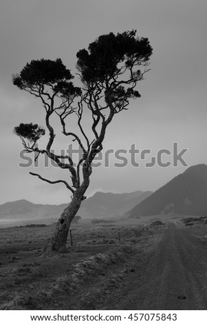 silhouette of lone windswept tree on coastal metal road, Te Araroa, East Coast, New Zealand