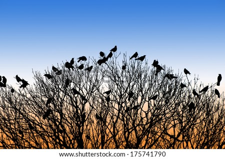silhouette of many birds on a treetop at sunset - stock photo