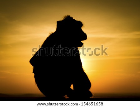 Silhouette of monkey in sunset
