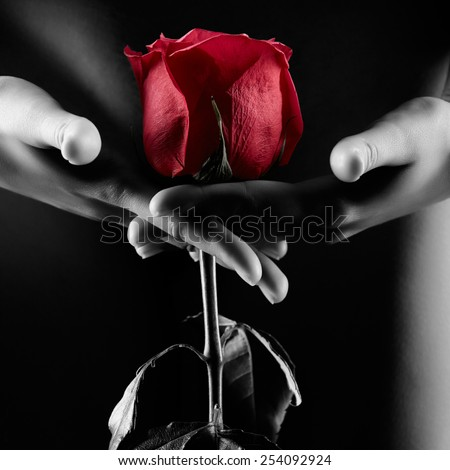Silhouette of nude beautiful young woman with red rose in hands near groin - stock photo